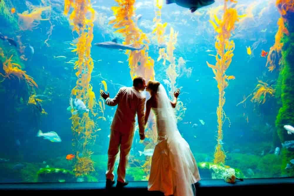 Bride and groom at an aquarium