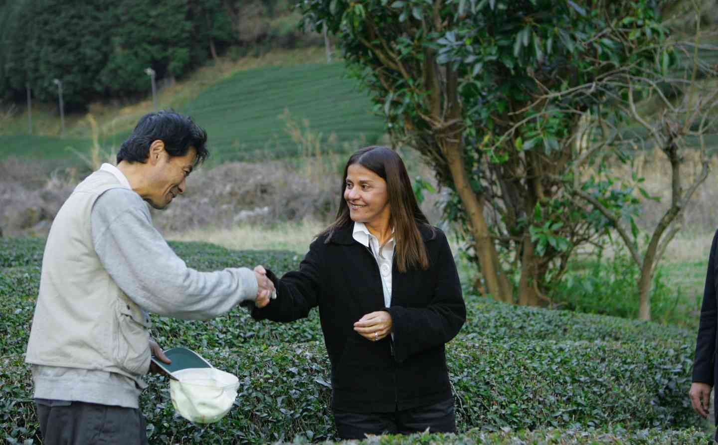 Man and woman shake hands while harvesting tea leaves