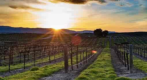 The Wine Country