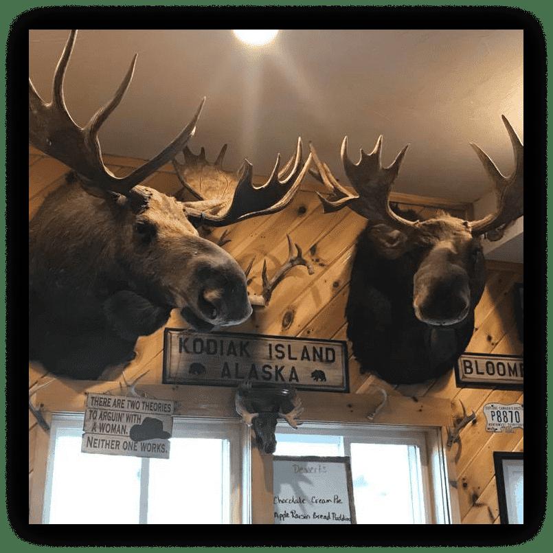 Moose mounted on wall