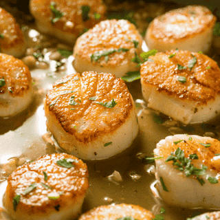Seared Scallops U10 (3 scallops per serving)