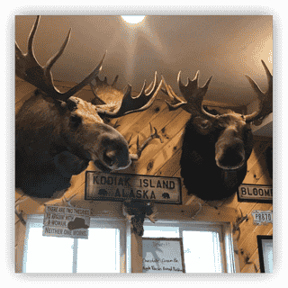 Moose mounted on wall