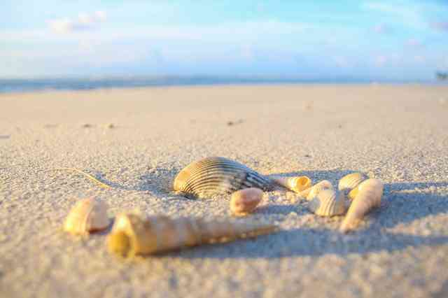 beach and seashells