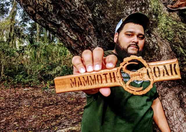 mammoth Oak