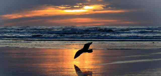 Ocean Shores Sunset, by Eagle Whisperer