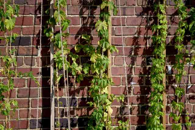 building exterior with vines