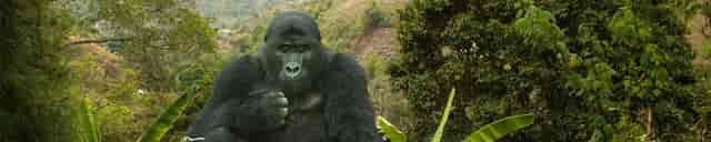 Mountain Gorilla Coffee Project