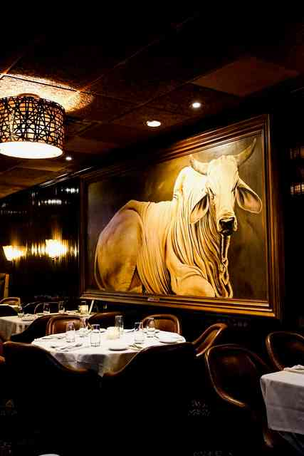 interior photo of bull