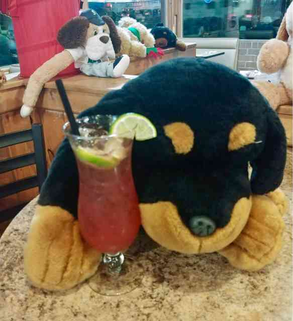 dog with a cocktail