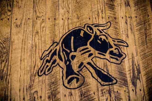 bull image