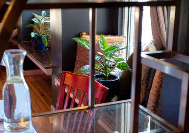 interior table and plant