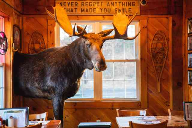 Moose at entrance