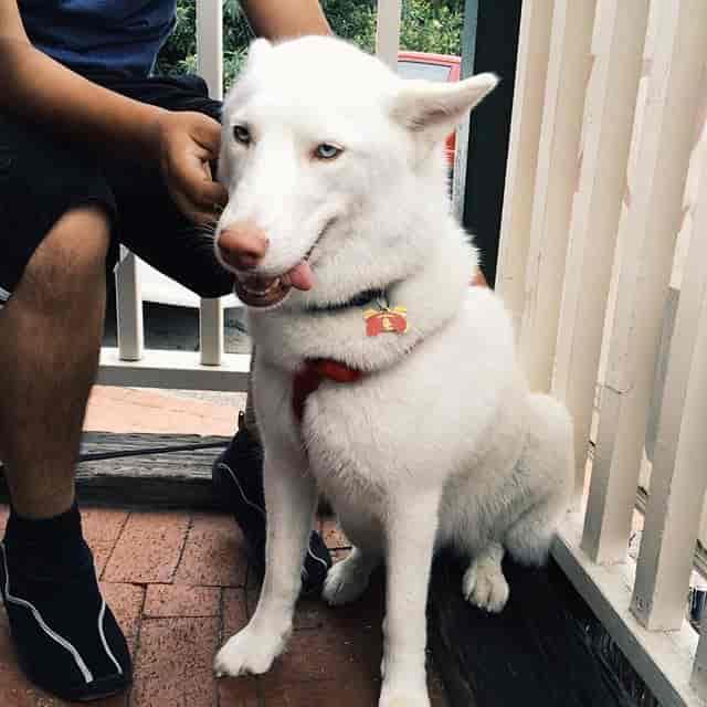 white dog sitting