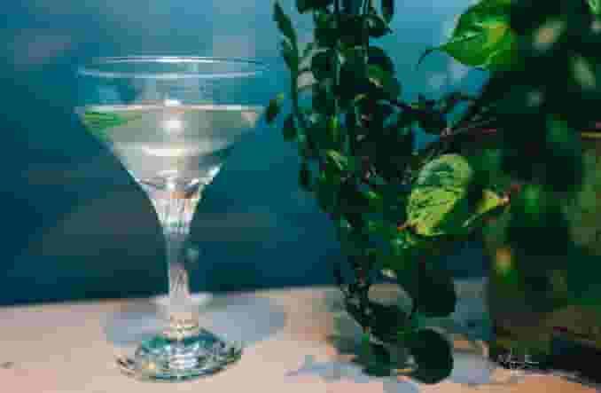 Fennel Martini