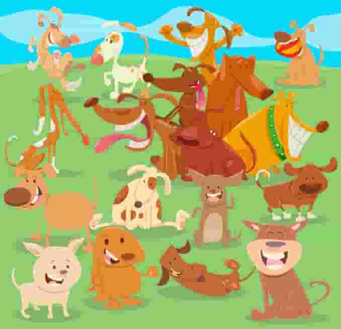 dogs in a field