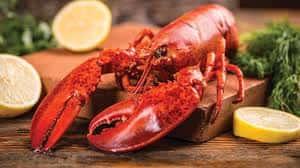 1.5 Pound Fresh Whole Maine Lobster