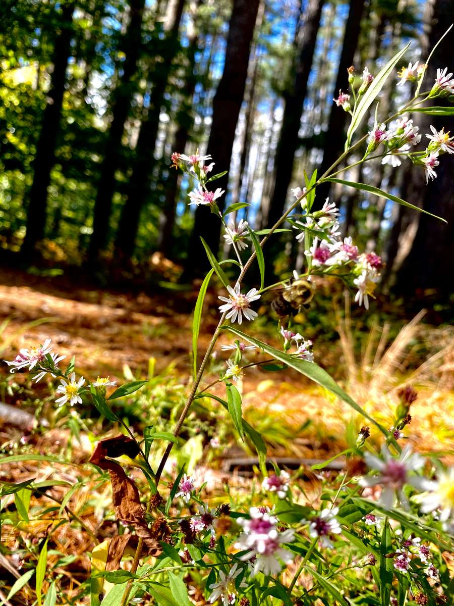 White and pink flowers in the woods