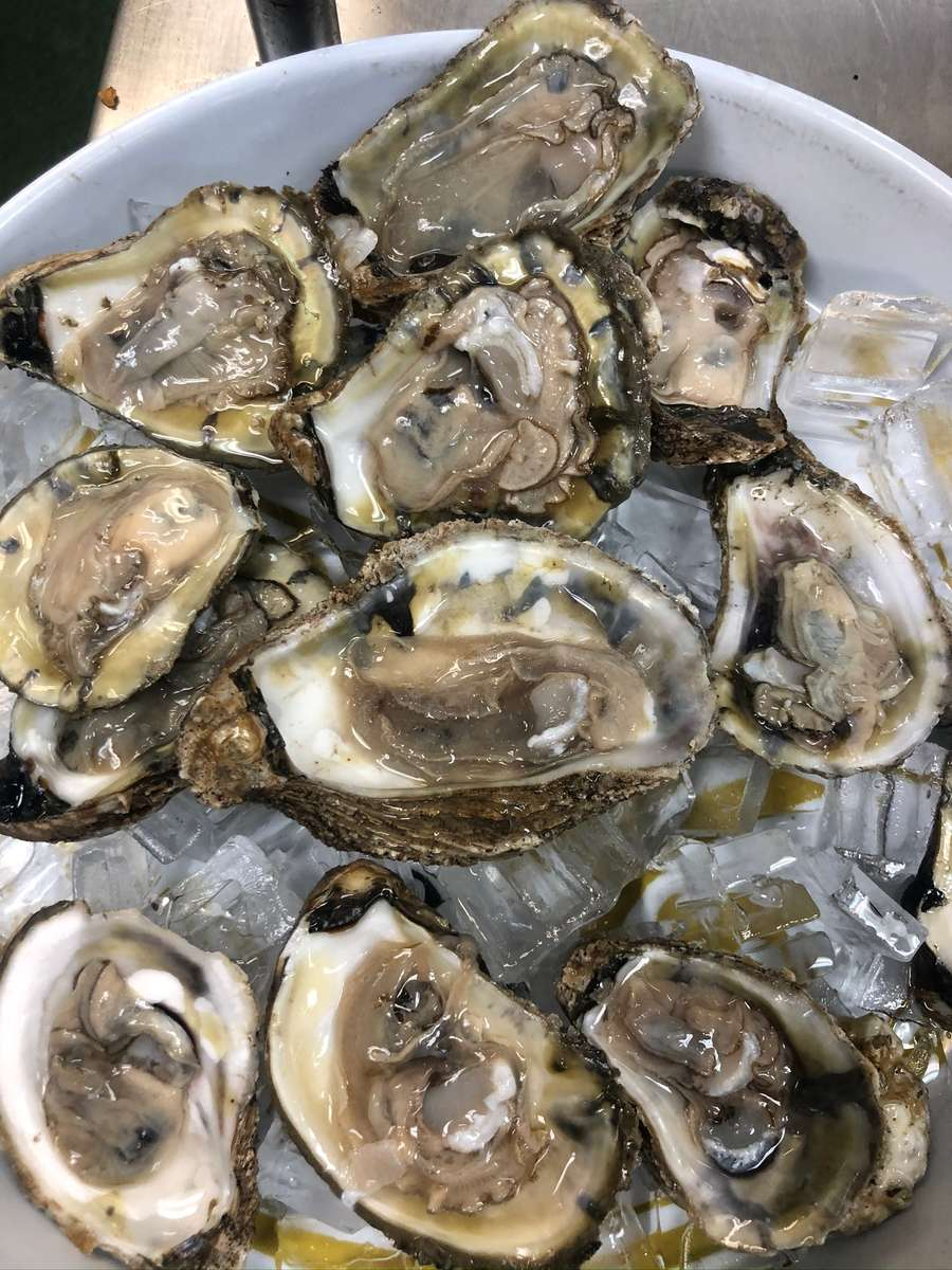 Bucket Of Oysters Special