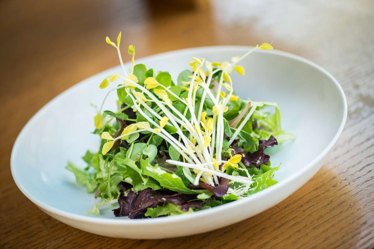 Field Green Salad with Creamy Ginger Dressing