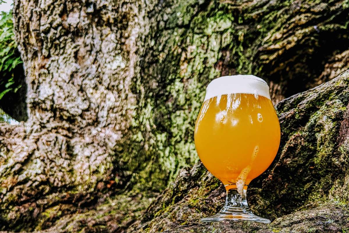 Beer glass in oak tree setting