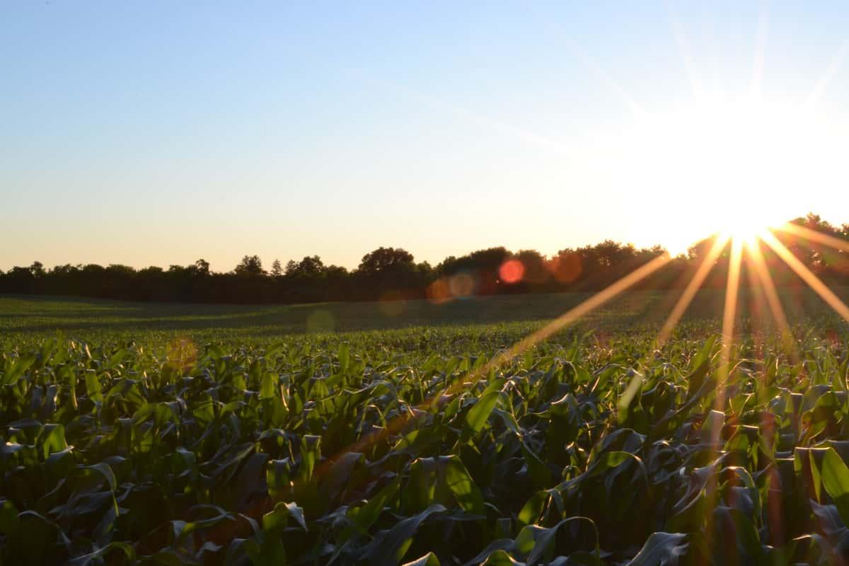 farm field stock photo