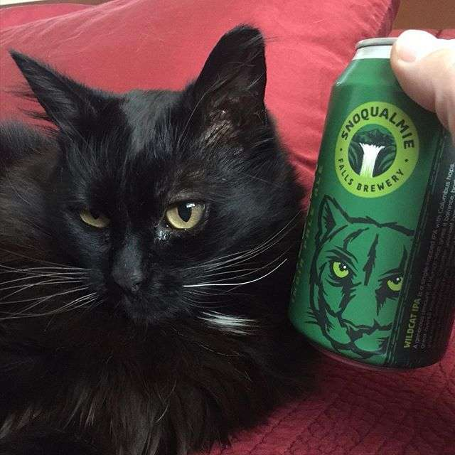 cat and beer can