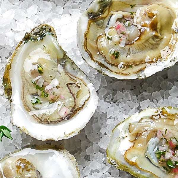 Live Oysters - Blue Point, Long Island, NY