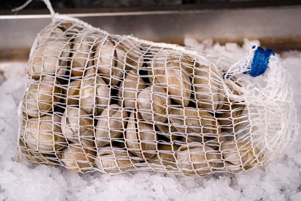 Fresh Oysters (Pint/Quart/Gallon)