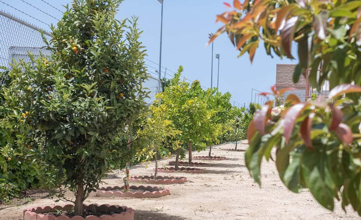 Citrus and avocado trees