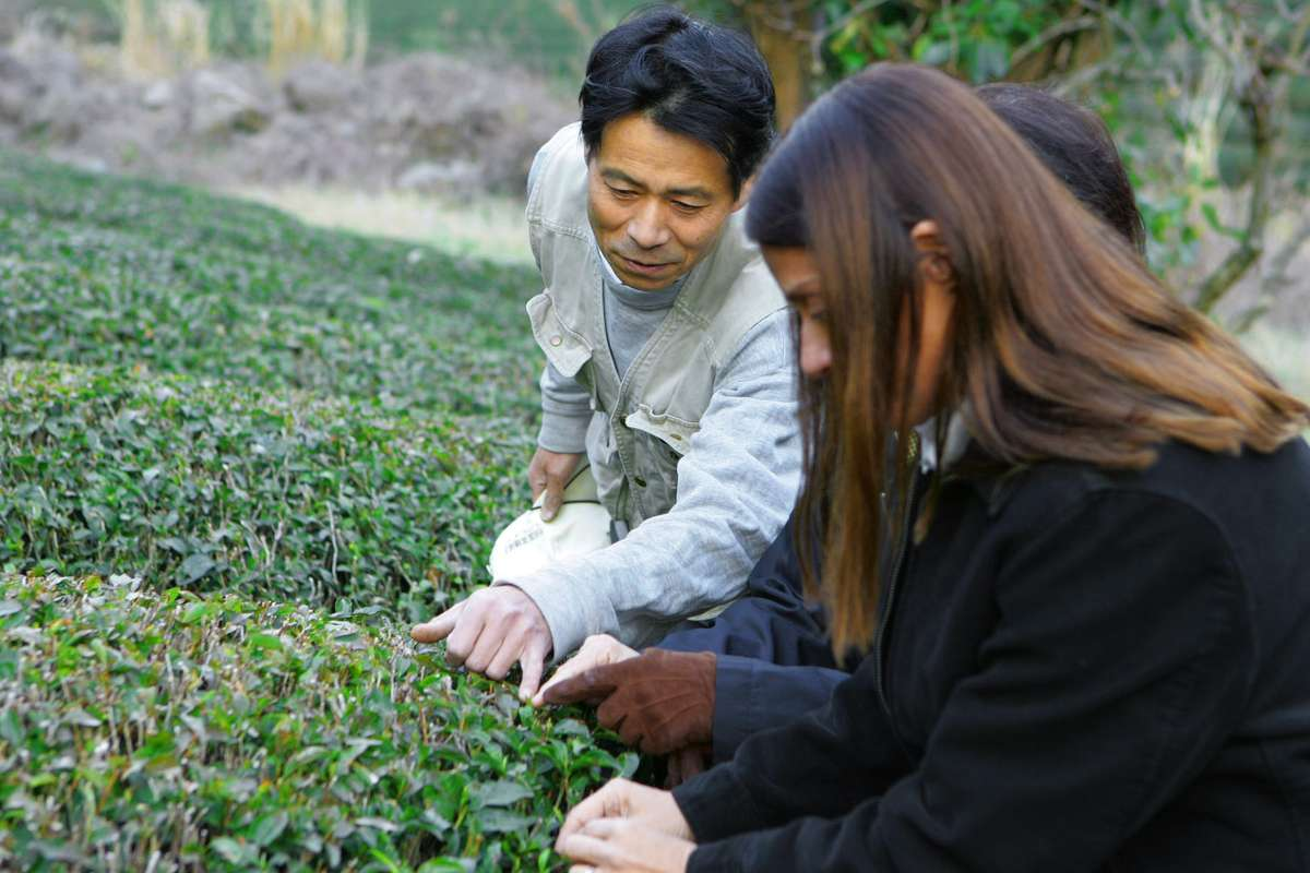 Man show tea plants to woman