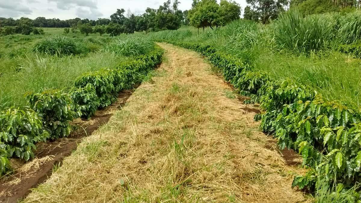 Organic compost fertilization