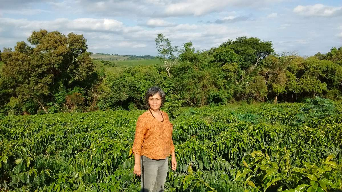 Woman standing in a large field of coffee plants