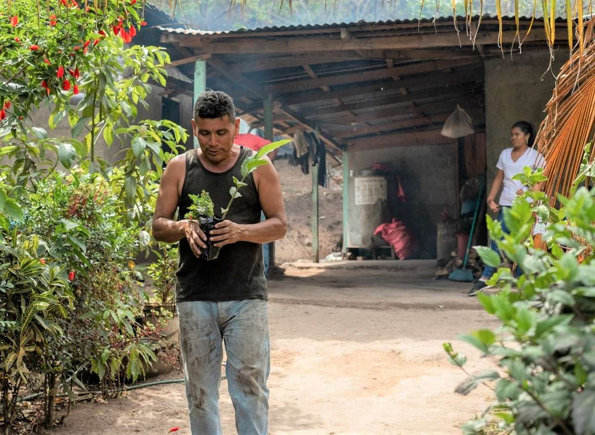 Franciso Polanco holds a coffee tree sapling