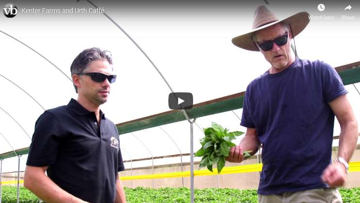 Image with video link showing Kenter Canyon farmer and Urth Chef Davide in a large greenhouse with green crops