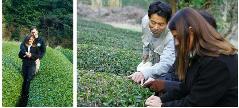 At left, Jilla and Shallom Berkman stand in a tea field in Japan. Right photo, tea farmer shows plants to Jilla Berkman.