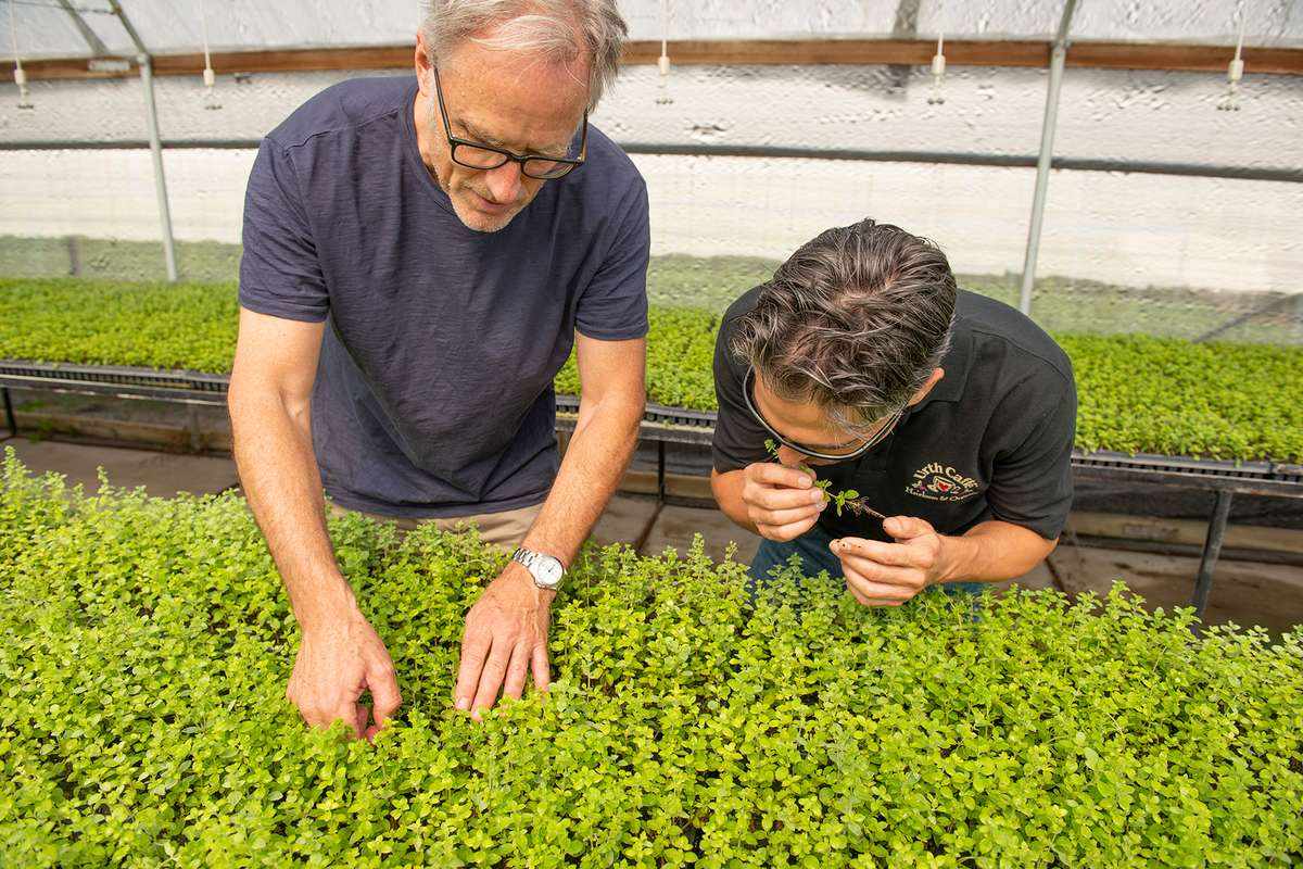 Kenter Canyon farmer and Urth Chef Davide take a close look at herb plants