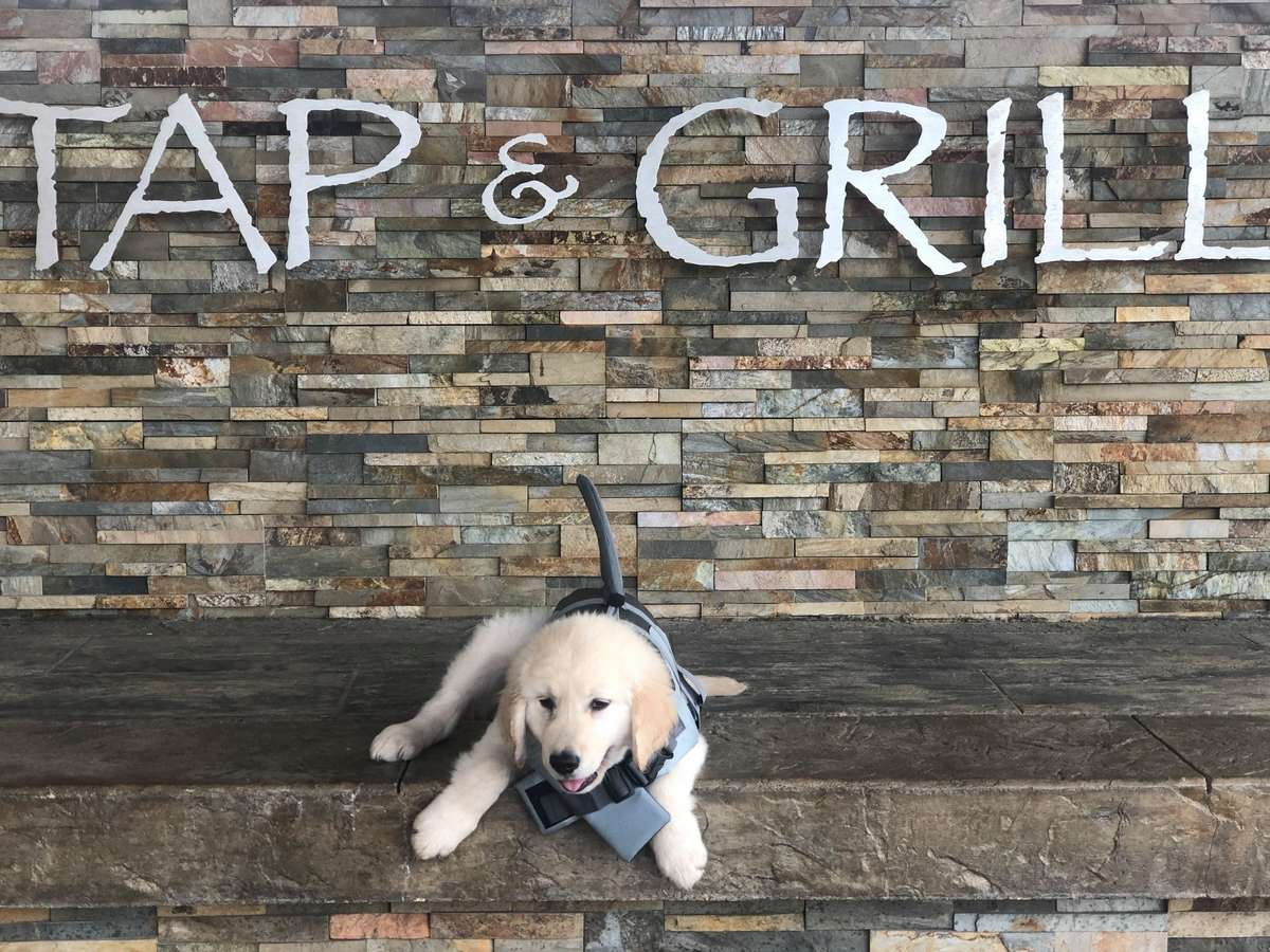 Tap & Grill puppy by wall