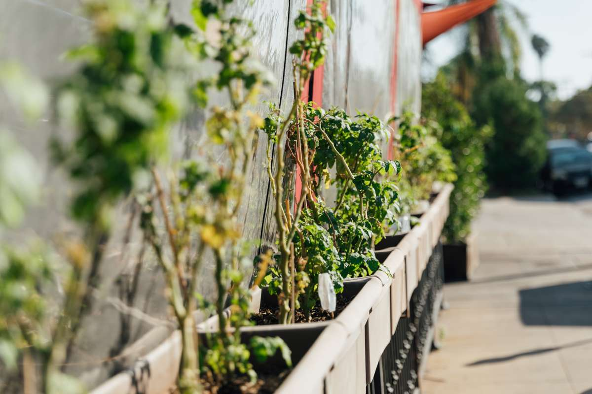 Exterior greenery growing around the restaurant