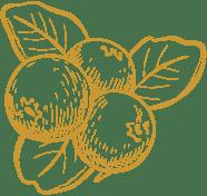 blueberries logo