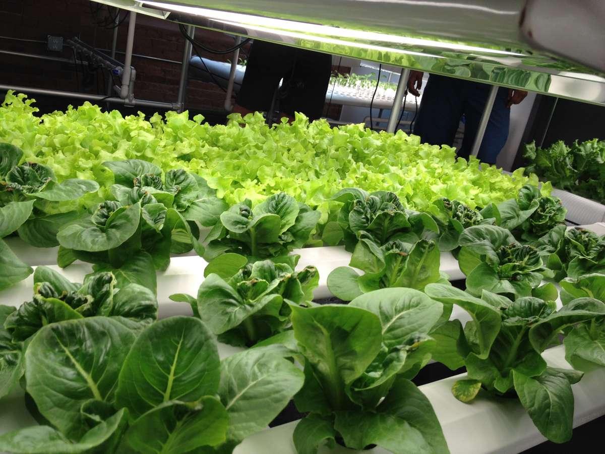 hydroponic gardens