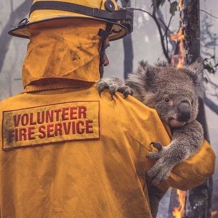 Donations for Australian Wildfire Relief