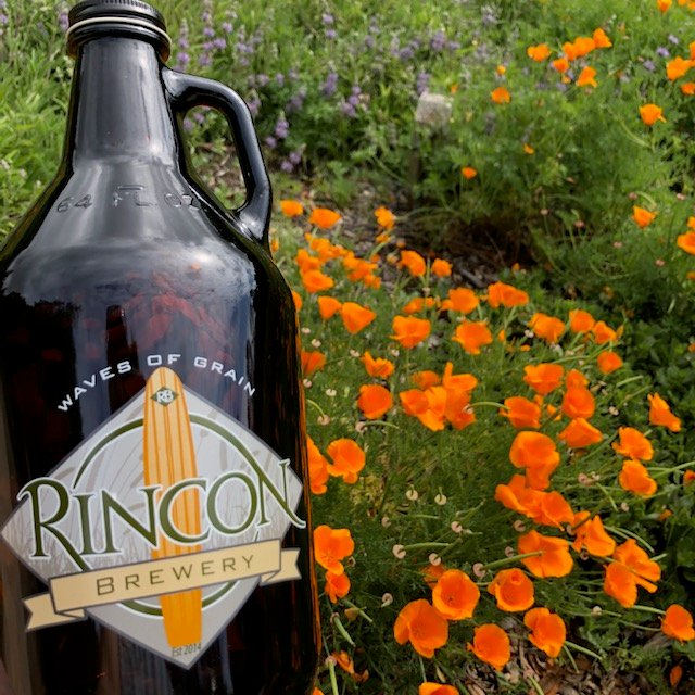 Growler in poppies