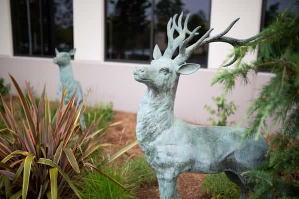 Elks outside