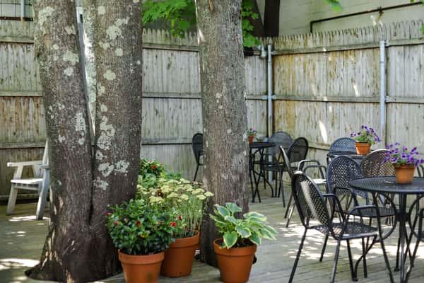 beer garden trees