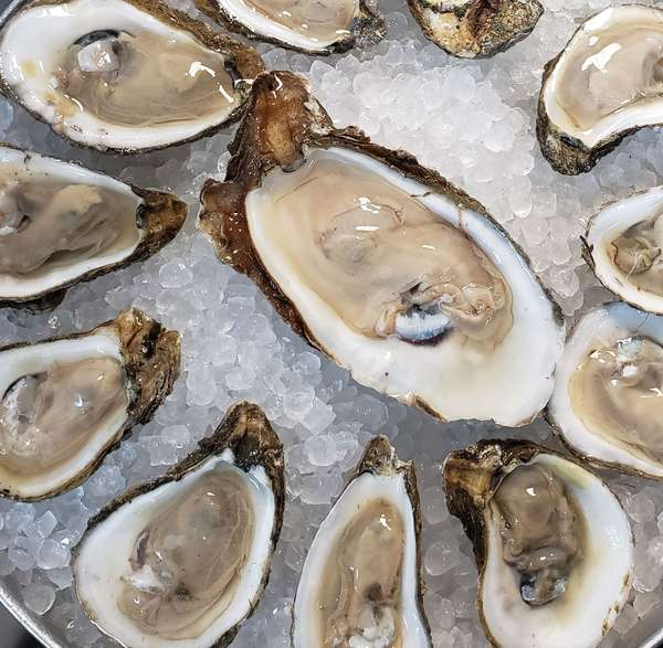 Oysters - Raw on the Half Shell