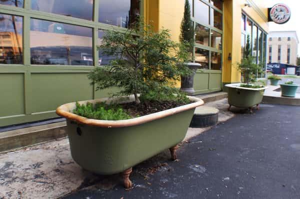 pasta_provisions_park_bonsai_tub