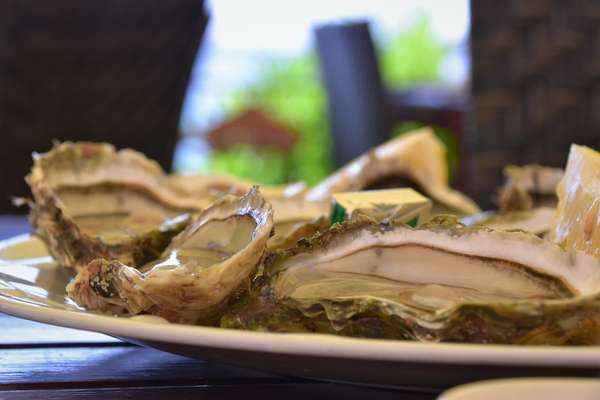 12 Raw Oysters
