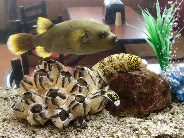 puffer fish and eel