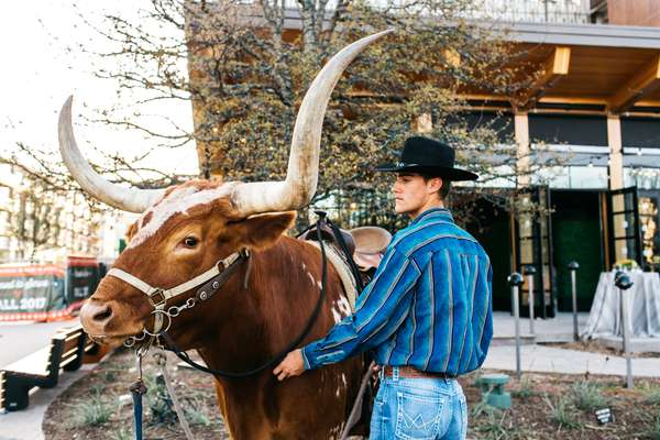 longhorn at a private event