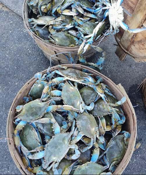 Fresh local crabs